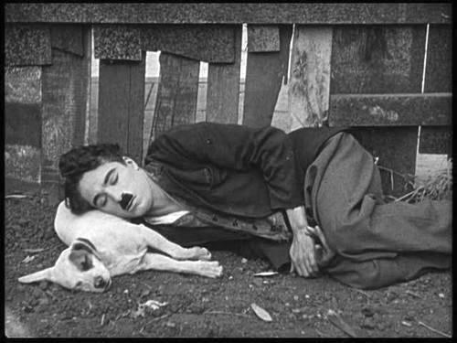 Chaplindog